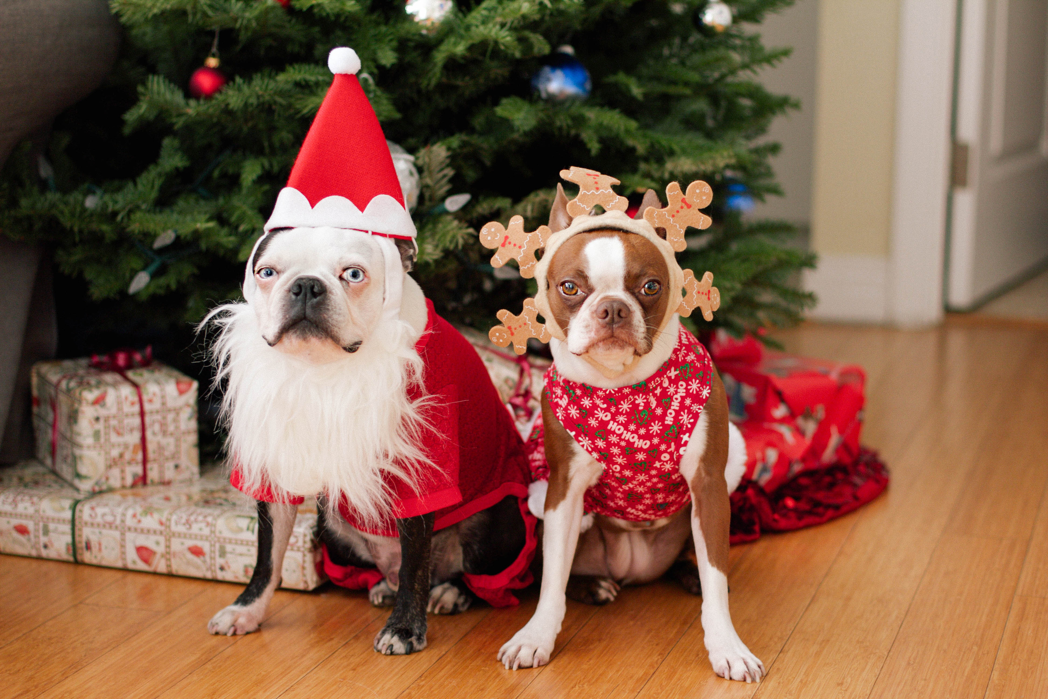 The 17 reasons why dogs love Christmas