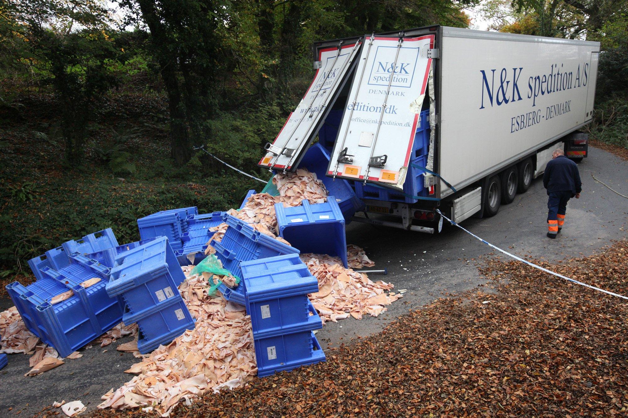 Lorry spills pig flesh all over the road after dodgy sat-nav diversion