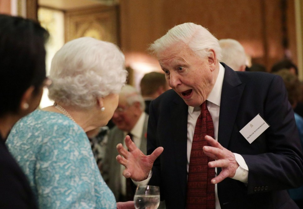 LONDON, ENGLAND - NOVEMBER 15: Queen Elizabeth II and Sir David Attenborough attend a reception to showcase forestry projects that have been dedicated to the new conservation initiative The Queen's Commonwealth Canopy (QCC) at Buckingham Palace on November 15, 2016 in London, England. (Photo by Yui Mok - WPA Pool/Getty Images)
