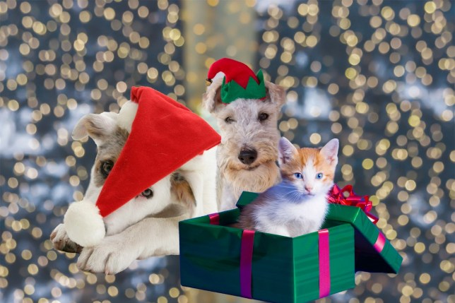 Christmas Questions To Ask.Rspca Reveal How Many Pets Are Abandoned Over Christmas