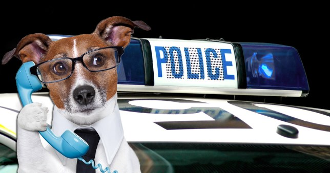 What kind of emergency calls would dogs make? (Picture: Shutterstock/Getty Images)