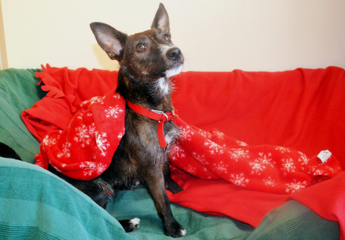 Battersea Dogs & Cats Home need your blankets so they can keep dogs warm and cosy