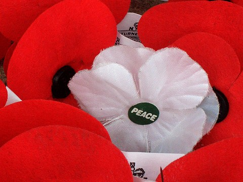 Why do people wear white poppies for Armistice Day and Remembrance Sunday?