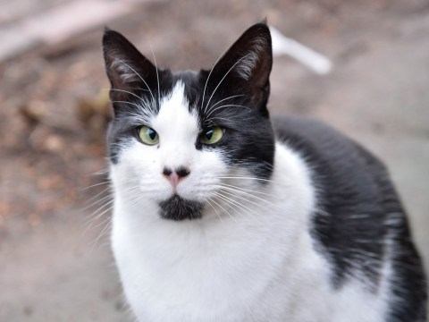 Bob the cross-eyed cat is desperately trying to find a home in time for Christmas