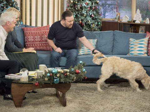 Ricky Gervais completely distracted by This Morning dog instead of promoting his DVD