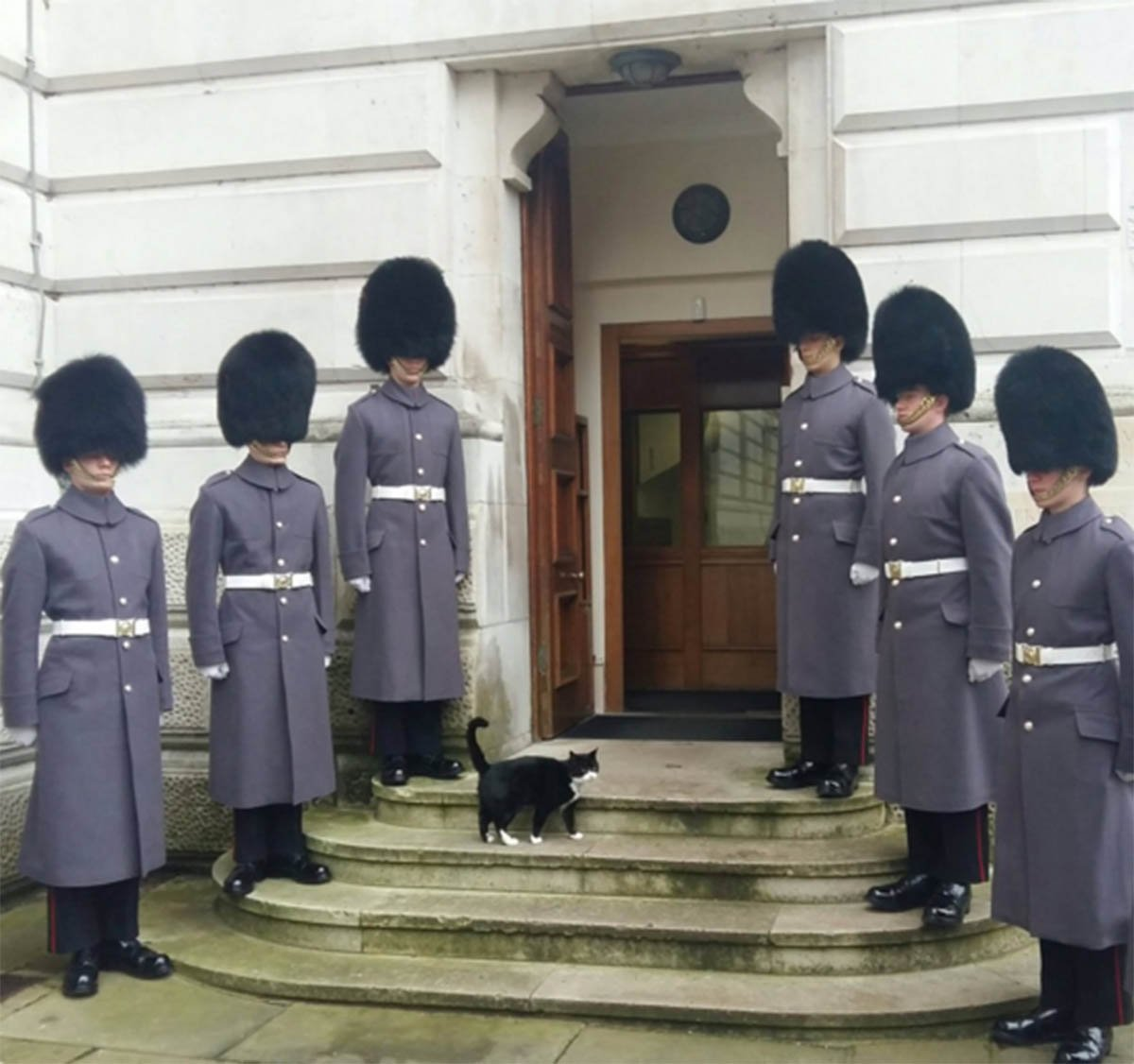 Foreign Office cat receives military guard of honour