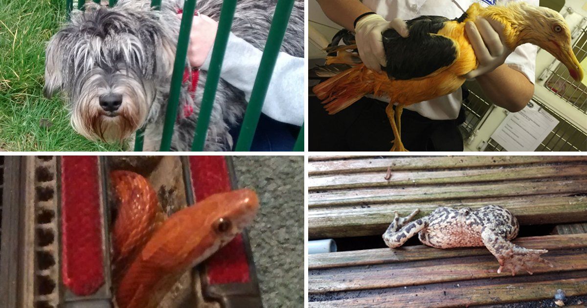 It's been a rough year for animals who had to be rescued in 2016