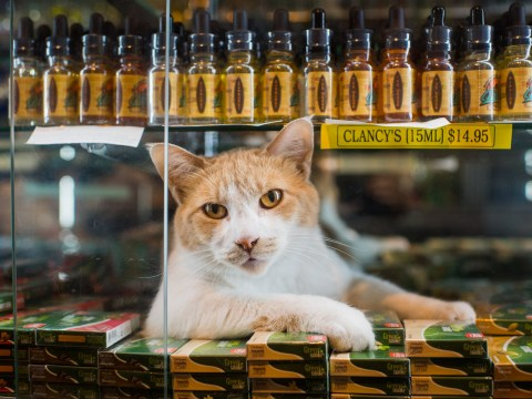 Glorious book celebrates cats hanging out in New York shops
