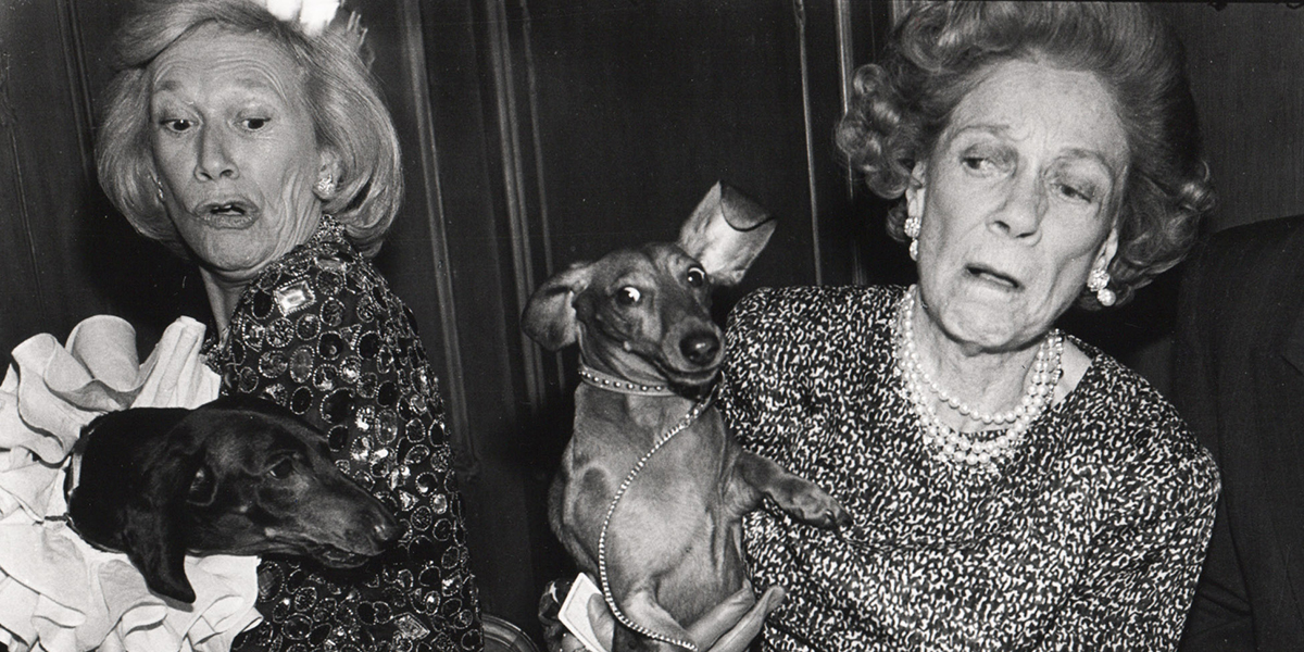 Dachshunds fighting over canapes, ris Love and Brooke Astor with Just Desserts and Dolly Astor at a Dachund party. Barbetta. Manhattan. 12 February 1990 Picture: Dafydd Jones