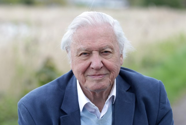 Sir David Attenborough is thrilled to be hosting Blue Planet II on BBC One (Picture: WireImage)