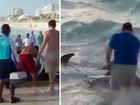 Tourists rush to help exhausted dolphins stranded on beach