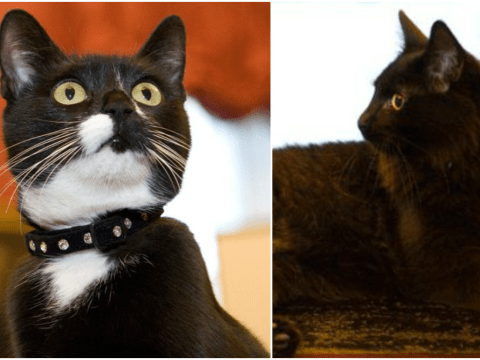 Cabinet Office has adopted two new cats – and they're even cuter than Larry