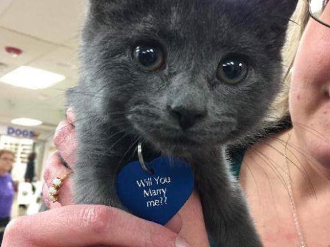 This man proposed to his girlfriend with a tiny rescue kitten