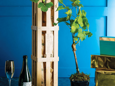 You can now grow your own prosecco – here's how to do it