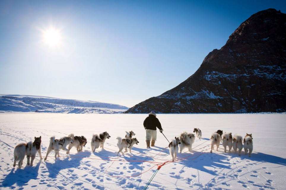 Taken in Northern Greenland, a Inuit (Eskimo) man walks with his whip and sled dogs on the snow covered sea ice