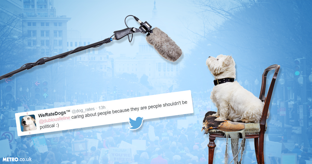 WeRateDogs Twitter combats Muslim ban with 'unconditional love' Credit; Getty Images