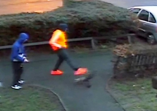 This is the shocking moment a lowlife yob was captured on CCTV kicking a CAT through the air. See NTI story NTIKICK. The thug, wearing a fluorescent orange jacket and bright trainers, slowly walks up to the moggy, called Millie, before booting it in the face. Sickening footage shows the cat flip backwards by the force of the kick before landing 6ft away on a grass verge. The boy then casually walks away from the scene with a pal. RSPCA officers were called by Millie's owner after she came home with horrific injuries. They checked local CCTV cameras and uncovered the shocking footage of the horrific attack outside the Guinness Trust flats in Sidney Street, Derby. The RSPCA has now launched an investigation into the incident which took place at 4.25pm on Thursday (12/1).