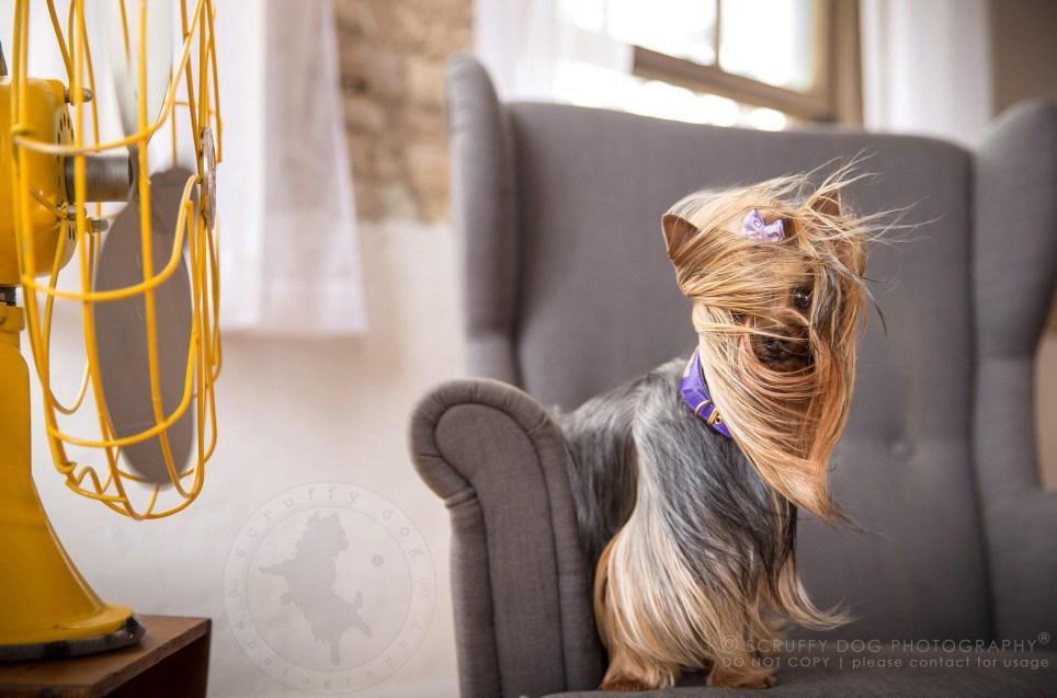 (Picture: Illona Haus/Scruffy Dog Photography) scruffy_dog_06_chloe_fazzari-41_original.jpg