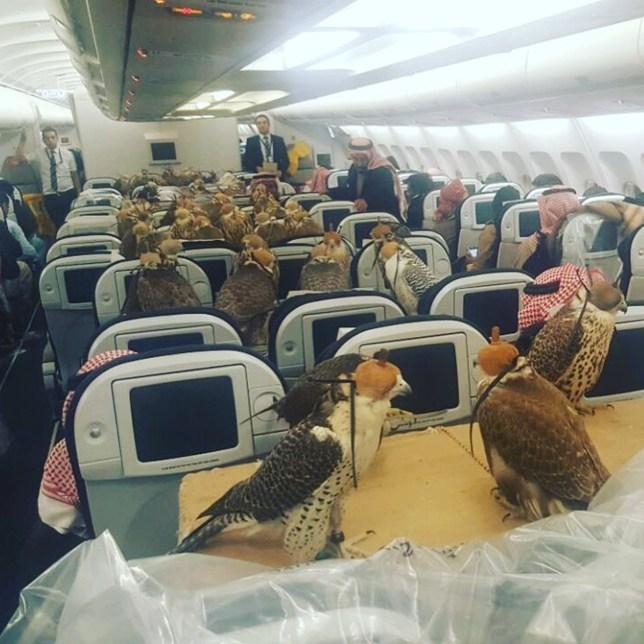 kestrels on a plane Credit: Reddit/lensoo