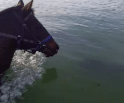 This lucky horse got to swim with dolphins