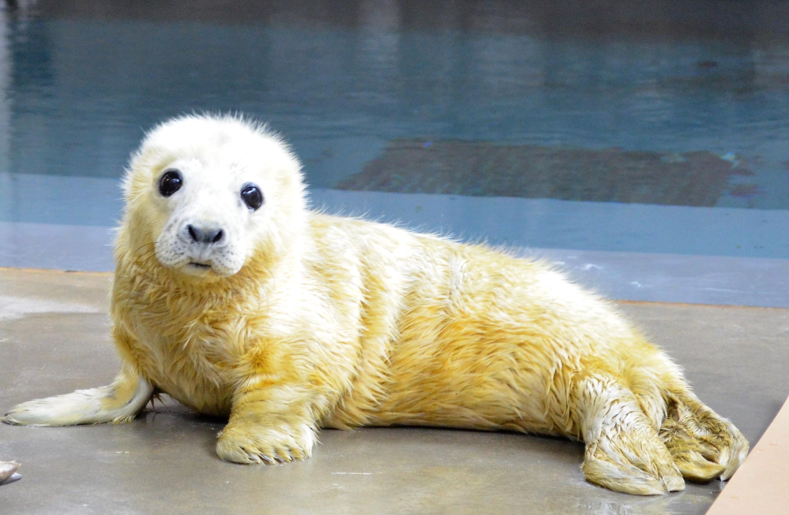 seal pup born at smithsonian national zoo