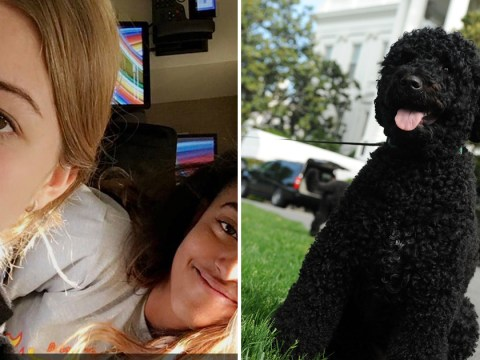 Obama's pet dog 'bites guest at White House'