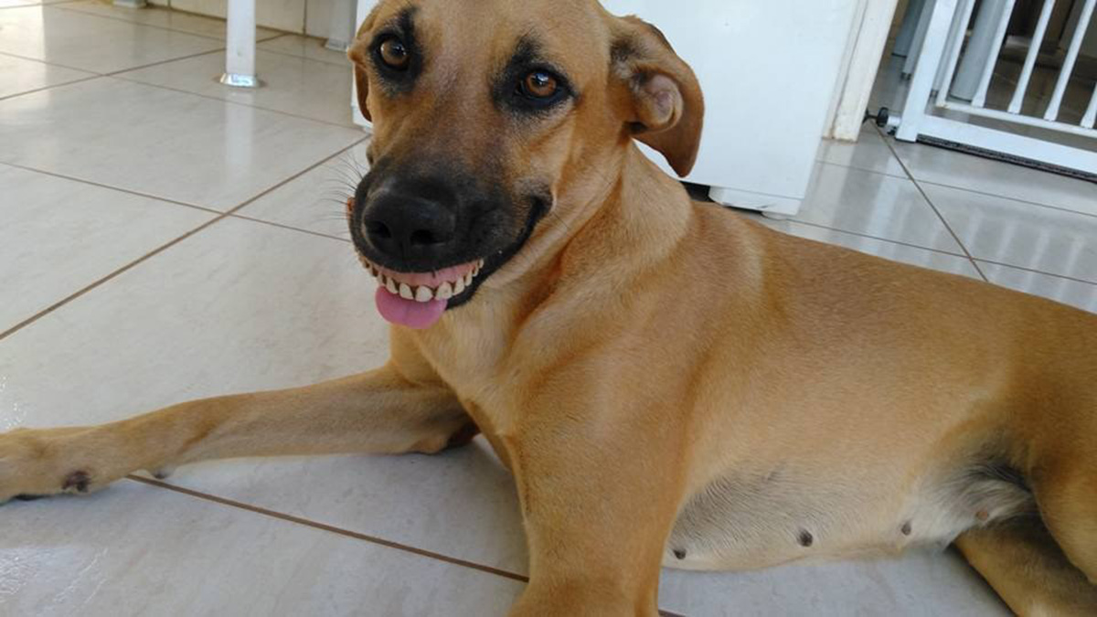 (Picture: Lucas Alves Magalhães) Man Is Shocked When His Dog Walks In With A Weird New Smile