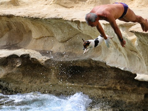 Seriously brave Jack Russell dives off 12ft cliffs with her owner in Secret Life Of Dogs