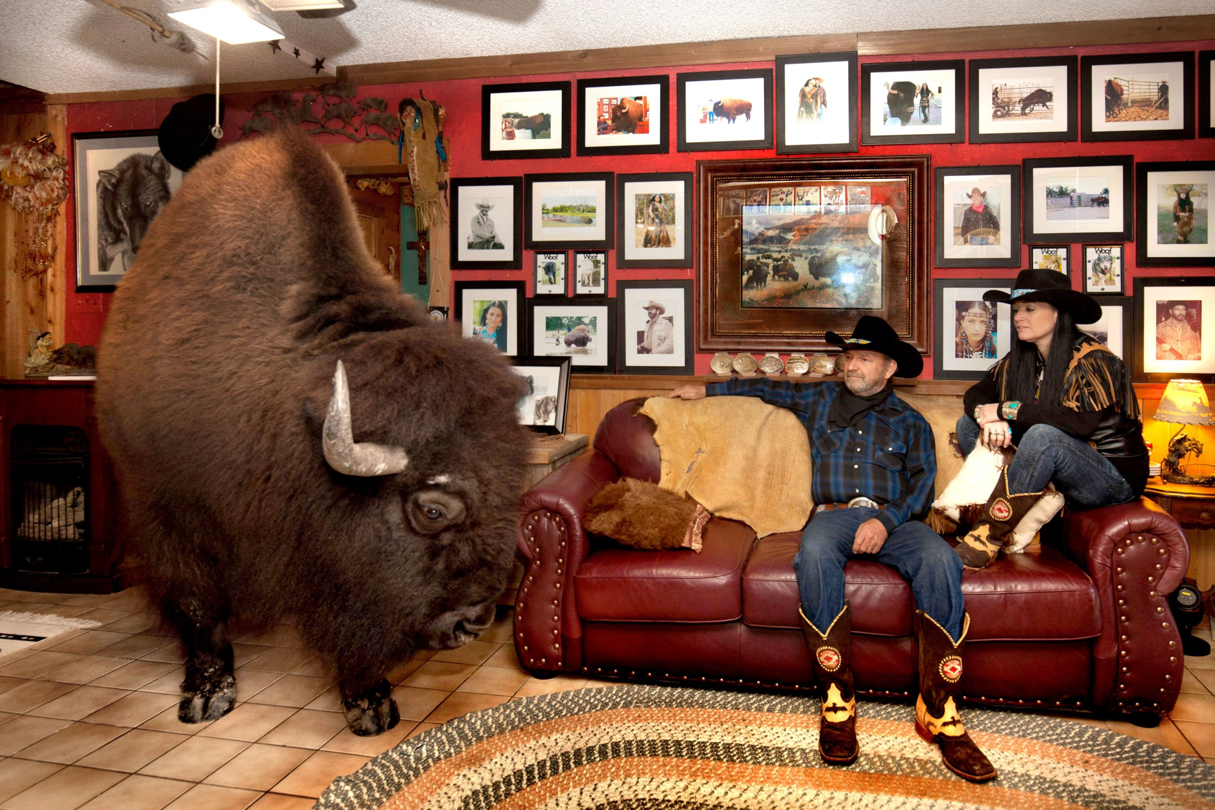 PIC BY Rasy Ran/ Caters News - (PICTURED: Ronnie, 60, and Sherron Bridges in their living room with Wild Thing) - This is the most pampered buffalo in the world and you will not believe these photos. Ronnie, 60, and Sherron Bridges, 44, from Texas, sold their herd of 52 buffalo in 2004 and replaced them with one calf they decided to treat rather differently. It was Sherrons idea to bring now 180 stone, Wild Thing into the home and giving him his own room to watch his favourite action movies. SEE CATERS COPY.
