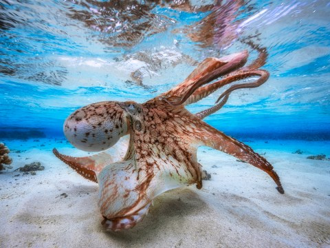 Take a deep dive into the best photographs from this year's Underwater Photographer of the Year contest