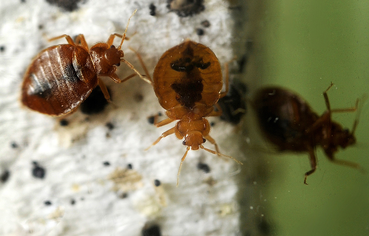 A woman died after being bitten by bed bugs (Picture: Getty Images)