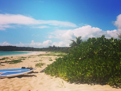 Why unspoilt, laidback Vieques should be the island for your next Caribbean holiday