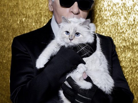 You can now buy Karl Lagerfeld's cat for £430