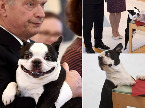 Finland's President has a top quality dog