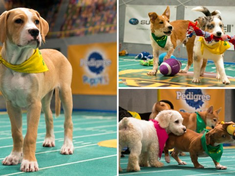 Screw the super bowl – the puppy bowl is what we want to see