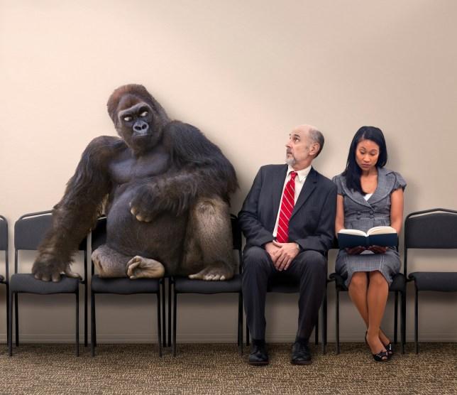 gorilla next to two people