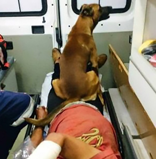 "Pic shows: Marrom sitting on his owners legs;nnBy Martina SalasnnA loyal dog waited outside the hospital where his master was being treated for eight days, becoming an internet star and reuniting his homeless owner with his family in the process.nnThe dog¿s owner, a homeless man identified only as Sandro, was brought to a hospital in Limeira, in the south-eastern Brazilian state of Sao Paulo, in an ambulance accompanied only by his loyal dog.nnThe dog, called Marronzinho, which means ""Brown"", was not allowed in the hospital and so he waited by the door.nnSandro¿s hospital stay, caused by pneumonia, looked set to be an extended one and as the dog showed no signs of leaving, hospital staff put up a poster explaining why he was there.nnAnimal protection association Alpa shared the story of Marronzinho on social media and the dog became an internet star.nnThe moment Sandro was released and reunited with the dog outside the hospital was covered as a news event by local media.nnAnd because the story was so widely broadcast, Sandro¿s long-lost relatives saw it and got in touch with him via a charity.nnA few days later Sandro was also reunited with his relatives, having not seen them for ten years.nnIt was not reported whether Sandro had been able to find a home with the new-found support of his relatives. Credit: CEN"