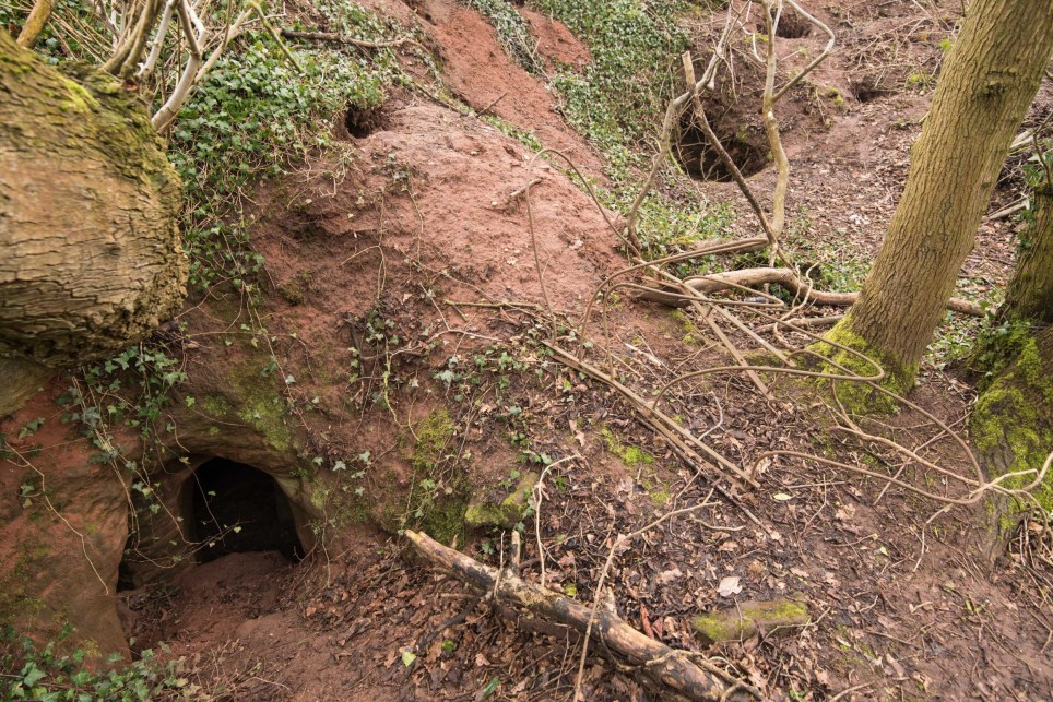 PIC BY Michael Scott/ Caters News - (PICTURED: The hole into the caves) - It might look like an ordinary rabbits hole, but this tunnel unearths a stunning CAVE. The unassuming hole reveals a cave which is hidden less than a metre beneath a farmers field. The untouched caves, in Shropshire, date back 700 years when they were used by the Knights Templars - a medieval religious order that fought in the Crusades. Photographer Michael Scott, from Birmingham, set out in search of the historical wonder after seeing a video of it online. SEE CATERS COPY.