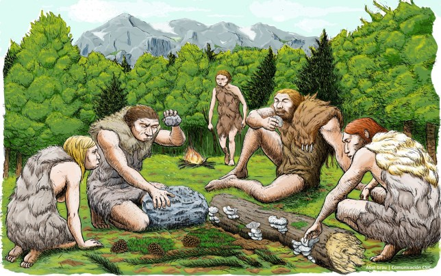 This drawing provided by Abel Grau Guerrero shows mostly vegetarian Spanish Neanderthals munched on mushrooms, pine nuts and moss. Scientists got a sneak peek into the kitchen and medicine cabinets of three Neanderthals by examining the DNA of the stuff stuck on and between their teeth. What they found smashes a common meaty misconception of the caveman diet and hints that one sickly Neanderthal had found what may be primitive versions of penicillin and aspirin to help him with his pain. (Abel Grau Guerrero via AP)