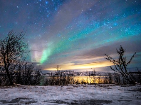 7 glorious reasons to visit Kirkenes in Norway – from the snow hotel to husky puppies