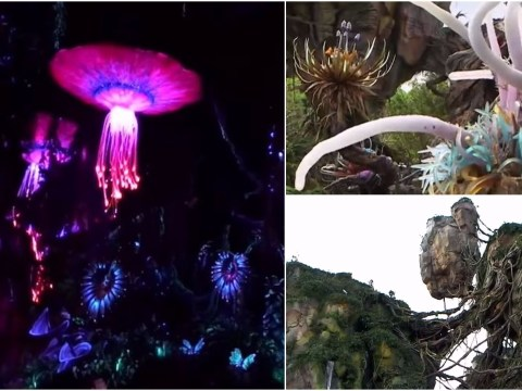 James Cameron gives us our first glimpse of Disney World's Pandora (aka Avatar Land)