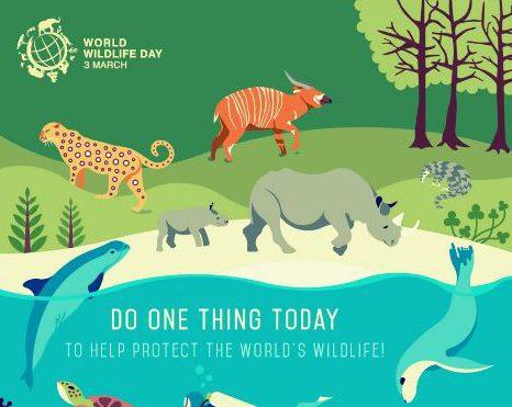 Picture: World Wildlife Day)