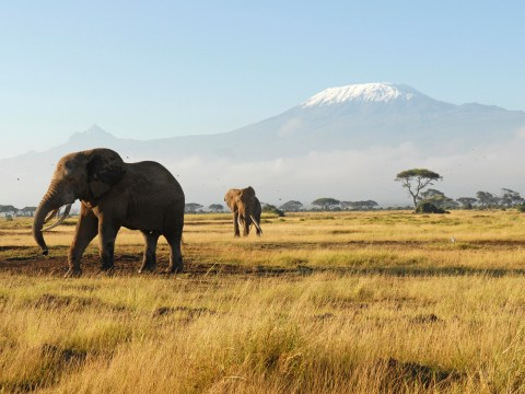 9 reasons you need to book a trip to Kenya right now