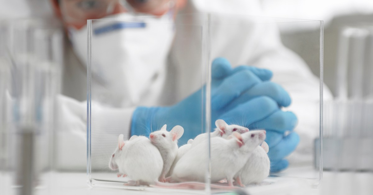 9 reasons why experiments on animals must stop | Metro News