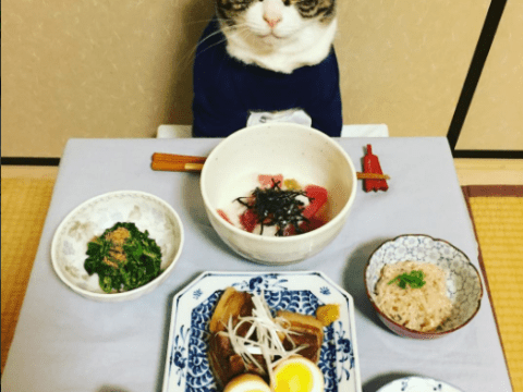 Why does this Japanese cat love to eat so much?