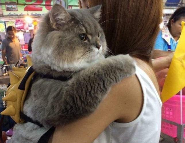 Meet P'Bone, your new favourite internet cat | Metro News