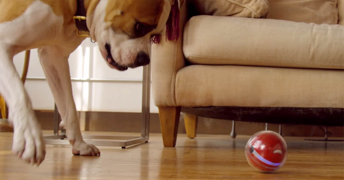 This gadget lets you play fetch with your dog even when you're at work