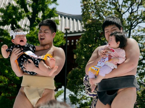 This Japanese festival has babies competing to cry the loudest