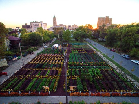Detroit's green-fingered residents are turning swathes of the city into urban farms