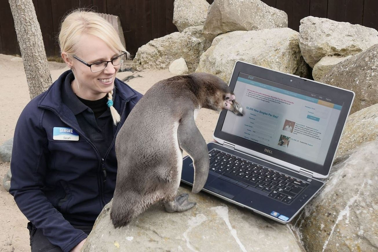 Penguin using Plenty of Fish to try and score a date